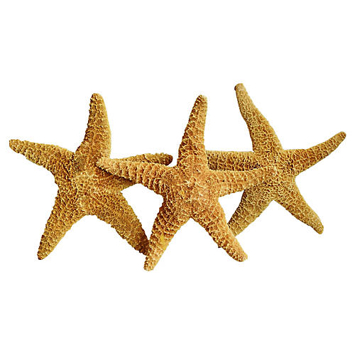 Large Natural Golden Starfish, S/3