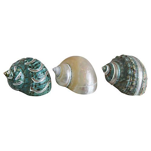 Ivory, Jade & Turquoise Seashells, S/3