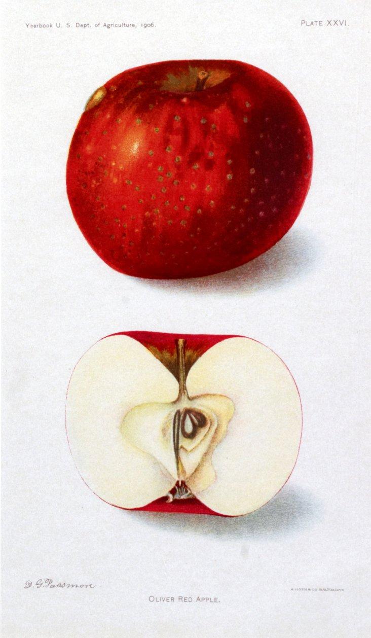 Oliver Red Apple