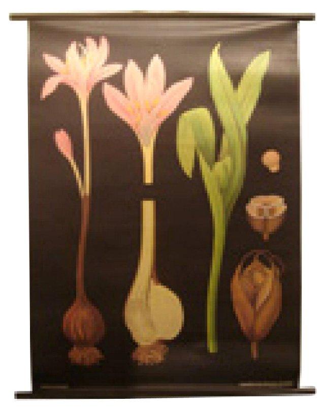 German Botanical Poster