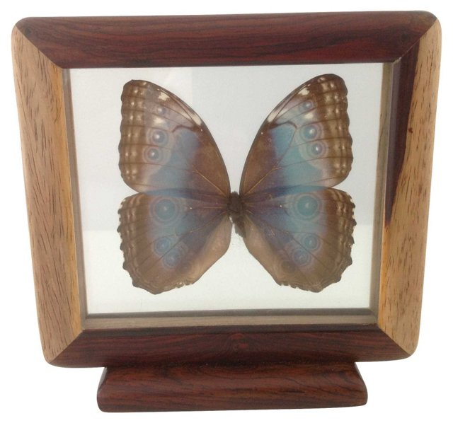 Framed Butterfly in Wood Stand