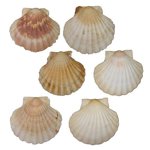 Mediterranean Scallop Shells, S/6