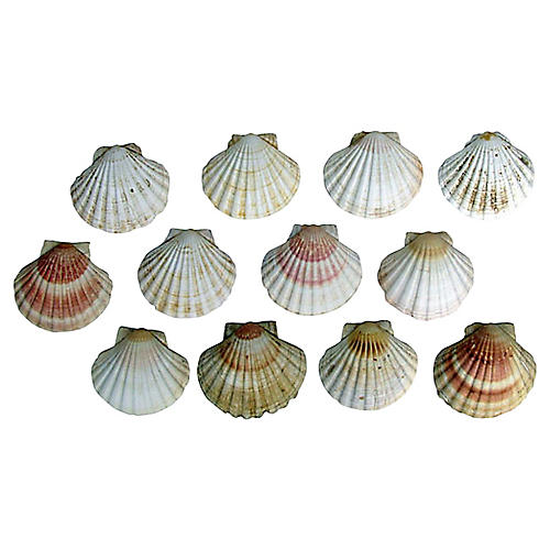 Natural Scallop Shells, S/12
