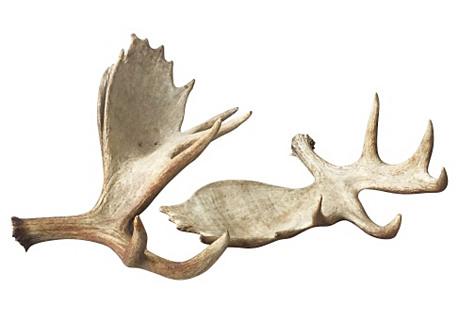 Large Natural Moose Antlers, Pair