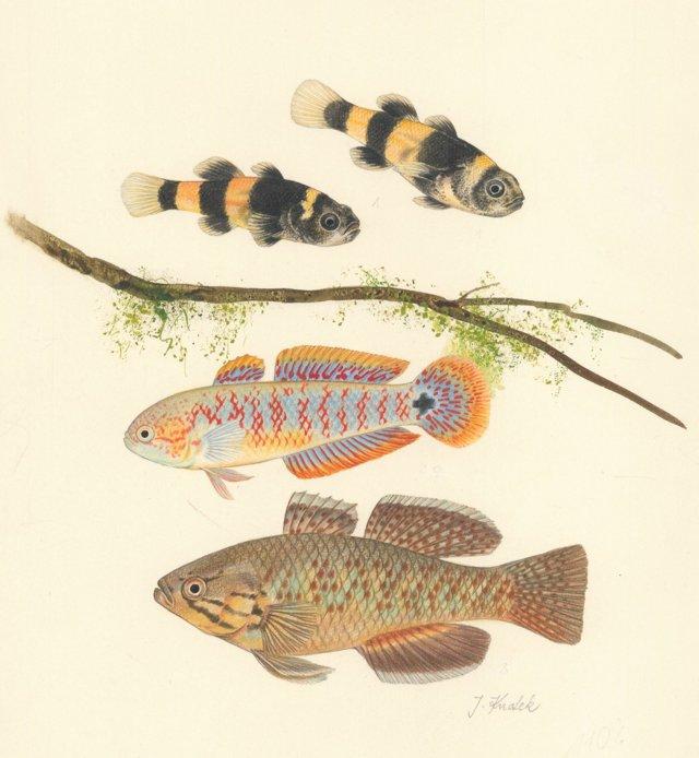 Hand-Drawn Aquarium Fish