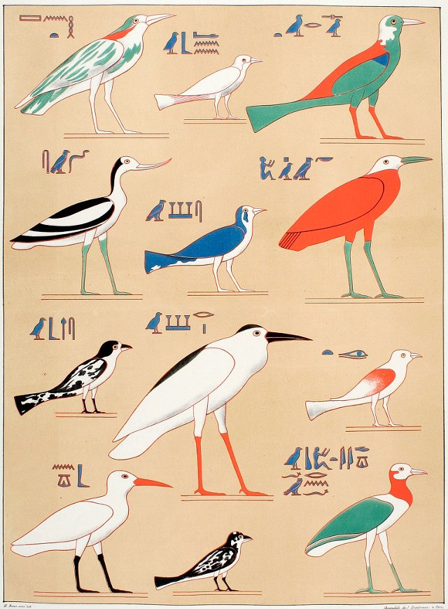 Egyptian Birds Hieroglyphs, 1845