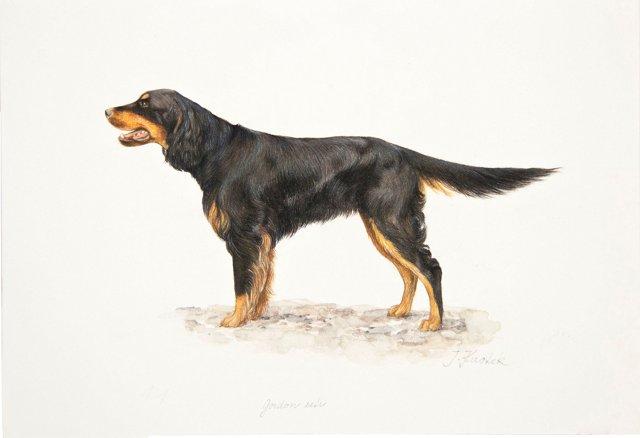 Gordon Setter Watercolor/Drawing