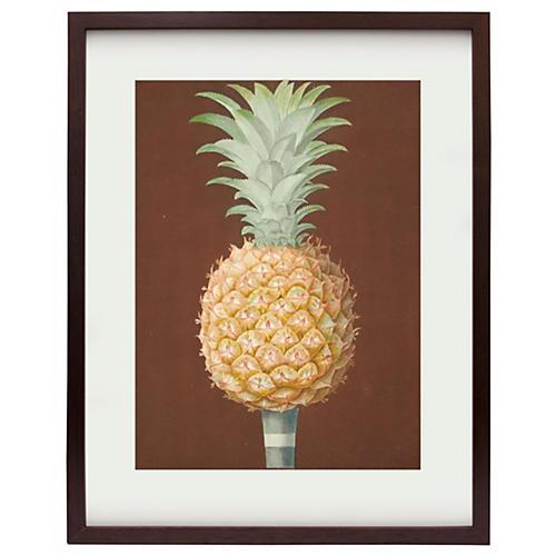 Framed Brookshaw Pineapple, 1804