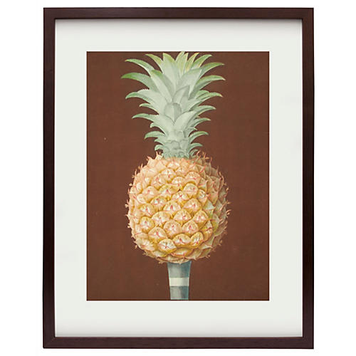 Framed Brookshaw Pineapple, 1804