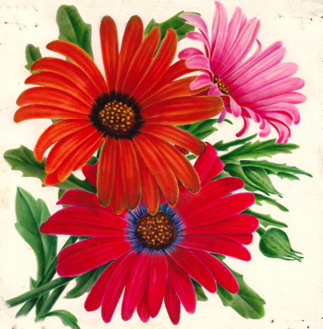 Gerbera Daisy Watercolor, C. 1935