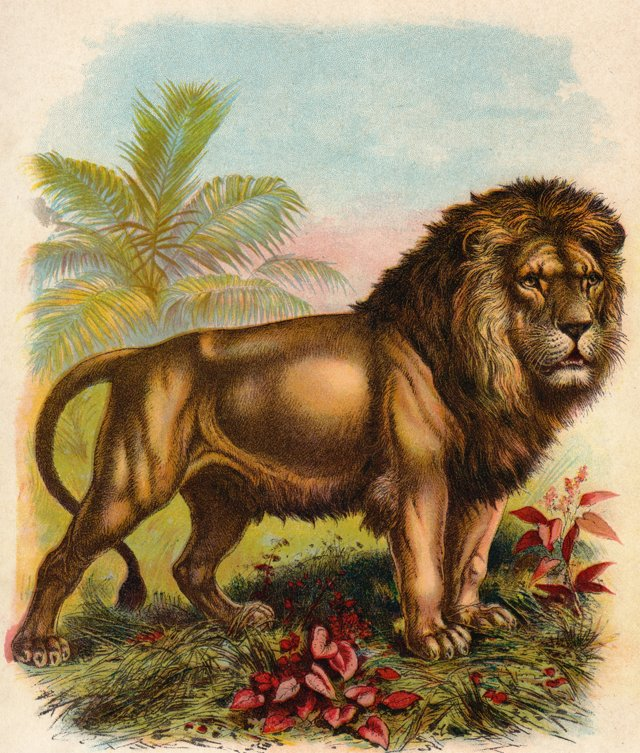 Lion Chromolithograph, 1902