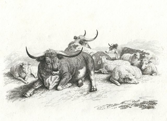 Cows and Sheep in Repose, C. 1812