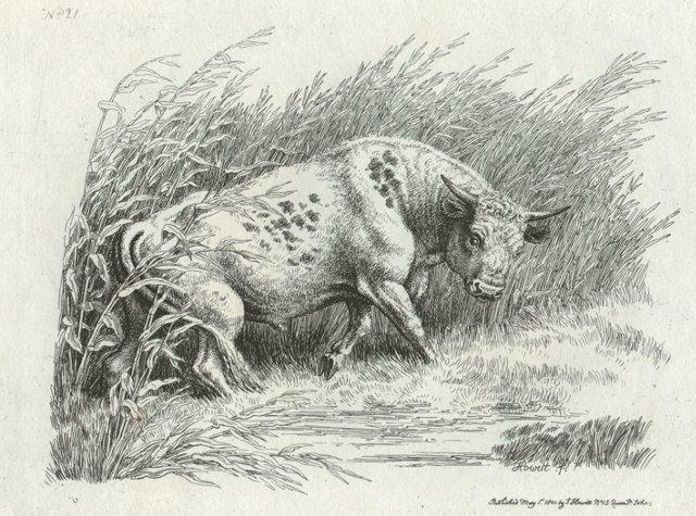 Bull in a Field, C. 1812