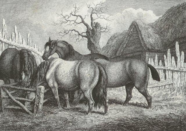 Four Horses in the Farmyard, C. 1812