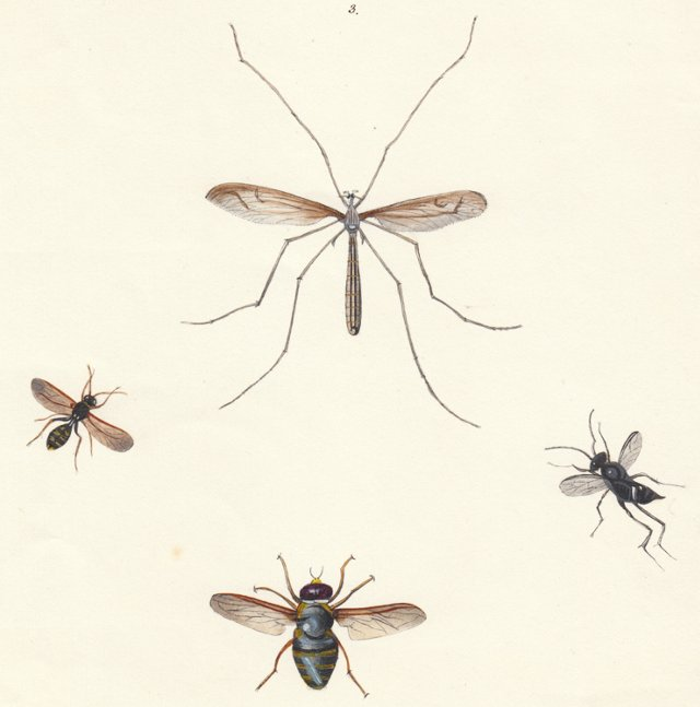 Watercolor of Insects, C. 1830