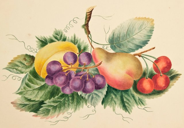 Watercolor of Fruit, c. 1880