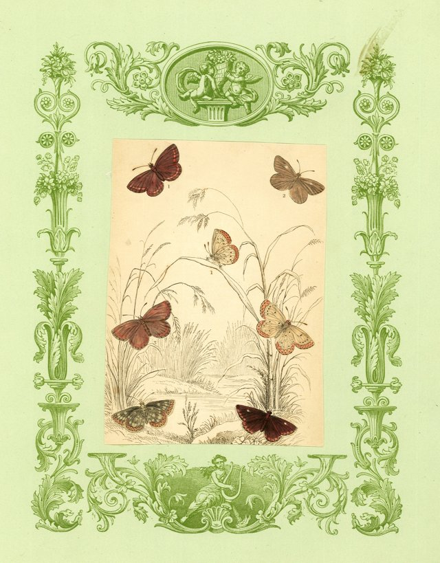 19th-C. Butterfly Collage