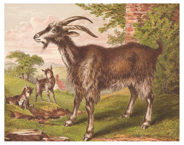 Goat and Kids, C. 1872