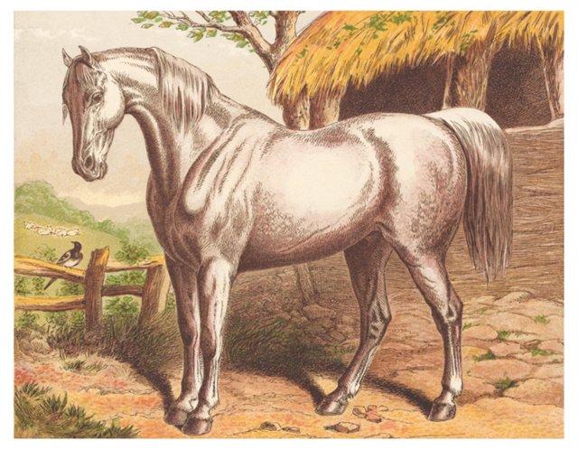 White Horse, c. 1872