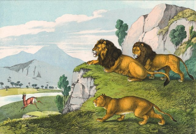 Lions on the Hunt, C. 1860