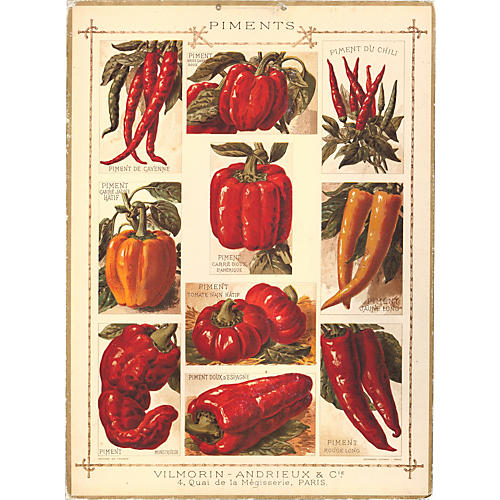 French Chart of Peppers, C.1900