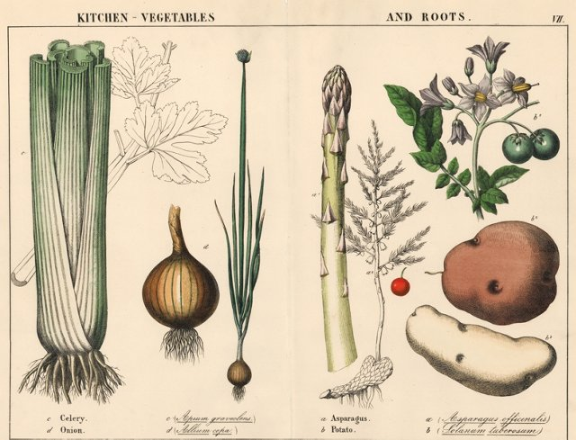 Hand-Colored   Kitchen Vegetables, 1857