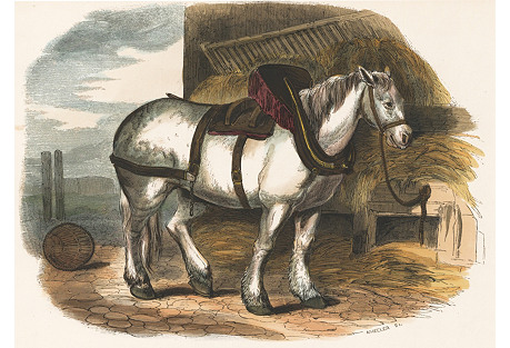 Hand-Colored Horse Engraving, 1843
