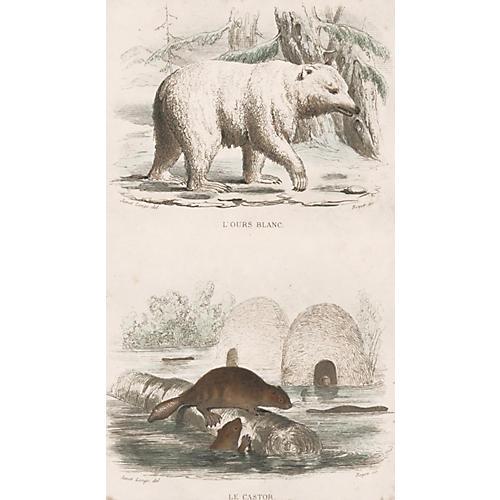 Polar Bear & Beaver, C. 1835