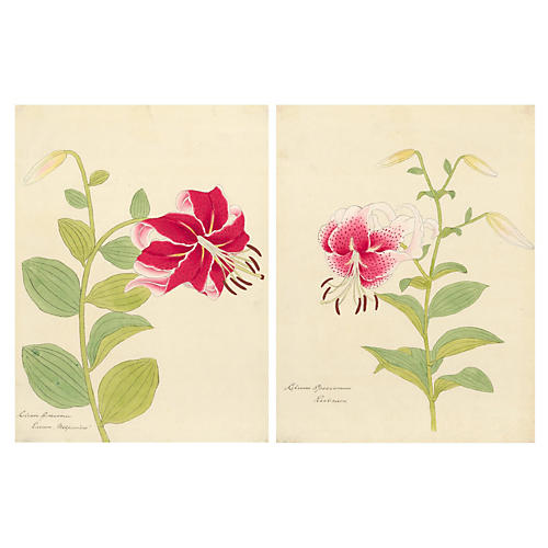 Gouache of Japanese Lilies, Pair