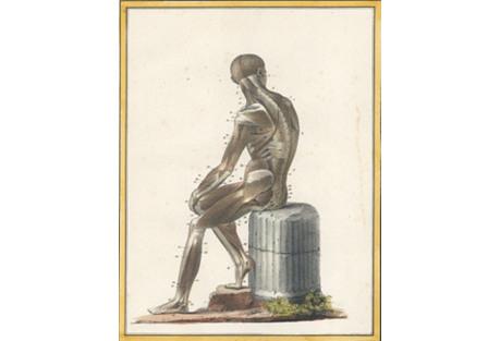 Human Musculature, 1825