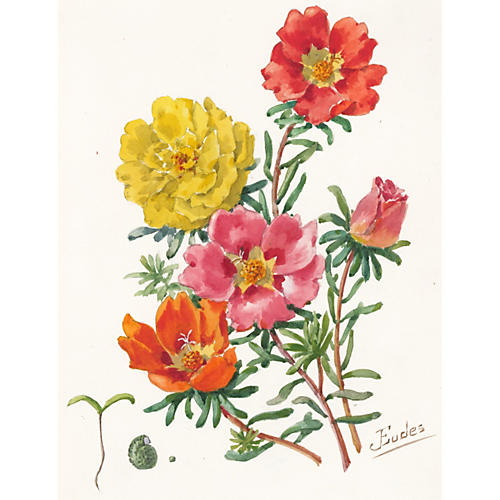 Evening Primrose Watercolor, C. 1900