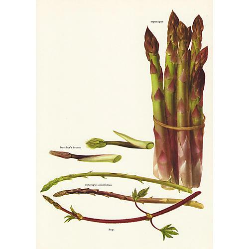 Asparagus Lithograph, C. 1975