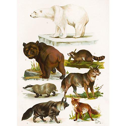Woodland Mammals & Polar Bear, C. 1900