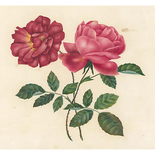 19th-C. French Watercolor of Roses