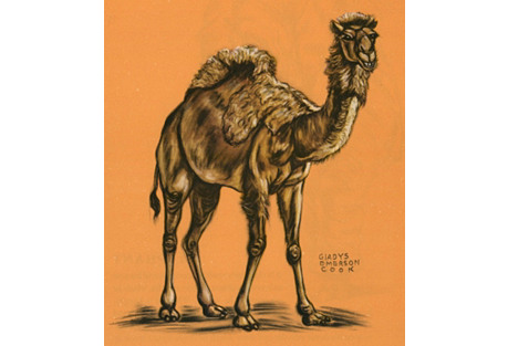 Camel Lithograph, 1943