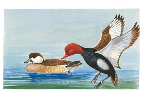 Midcentury Gouache of Ducks
