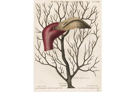 Hand-Colored Flamingo & Coral, C. 1760