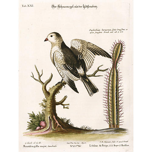 White Winged Finch w/ Cactus, C. 1760