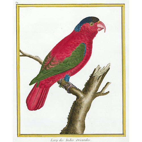 Red Parrot by Martinet, C. 1780