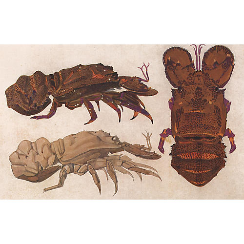 Lobsters by Mathurin Meheut, 1924
