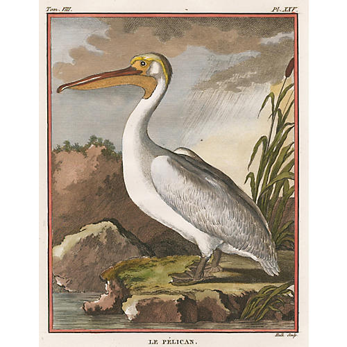 Hand-Colored Pelican by Buffon, C. 1750