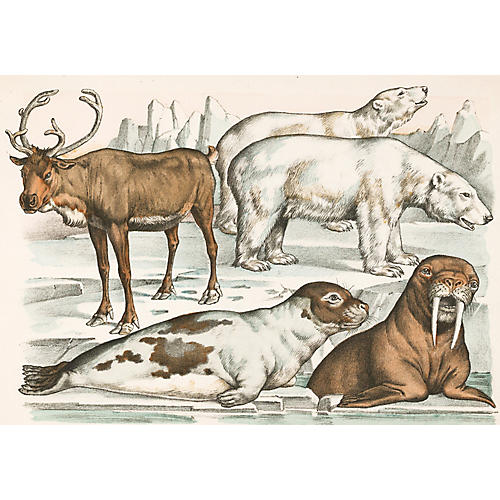Lithograph of Polar Animals, C. 1880