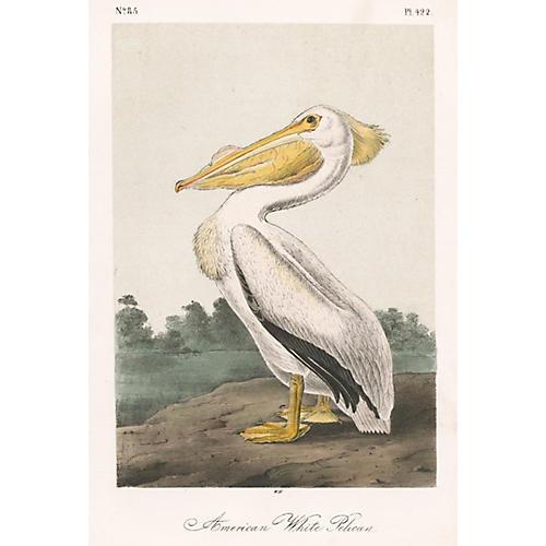 Original Audubon Pelican, Ca. 1856
