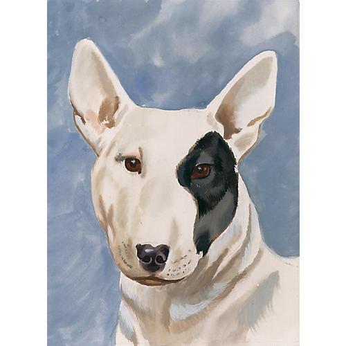 Bull Terrier Portrait, C.1955