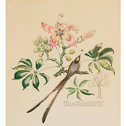1940s Botanical Watercolor by A. Peacock