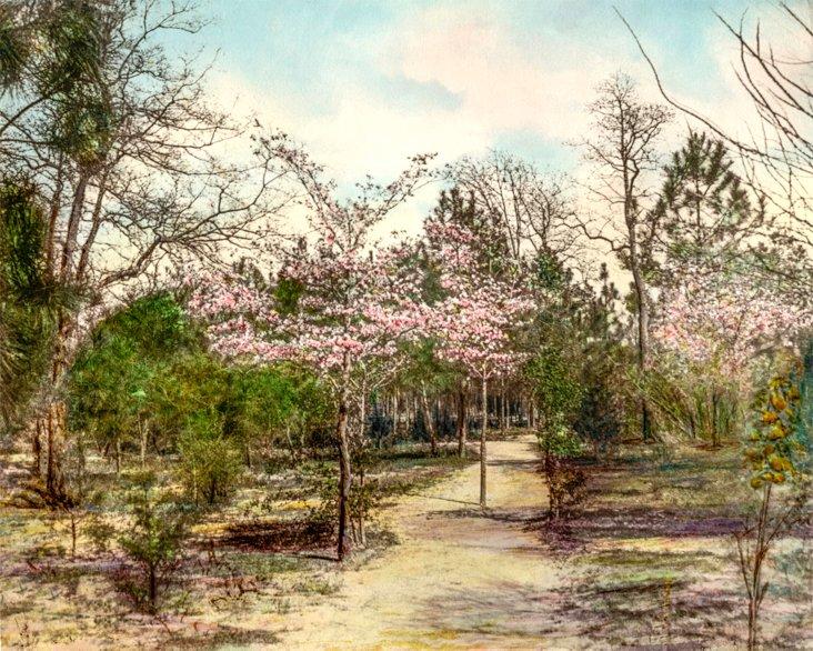 Asheville,             1898