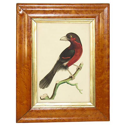 19th-C. Exotic Bird Print