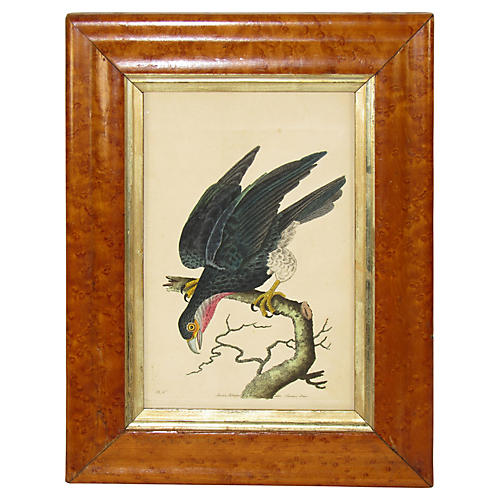 Antique Parrot Print