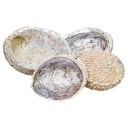 Weathered Abalone Shells, S/4