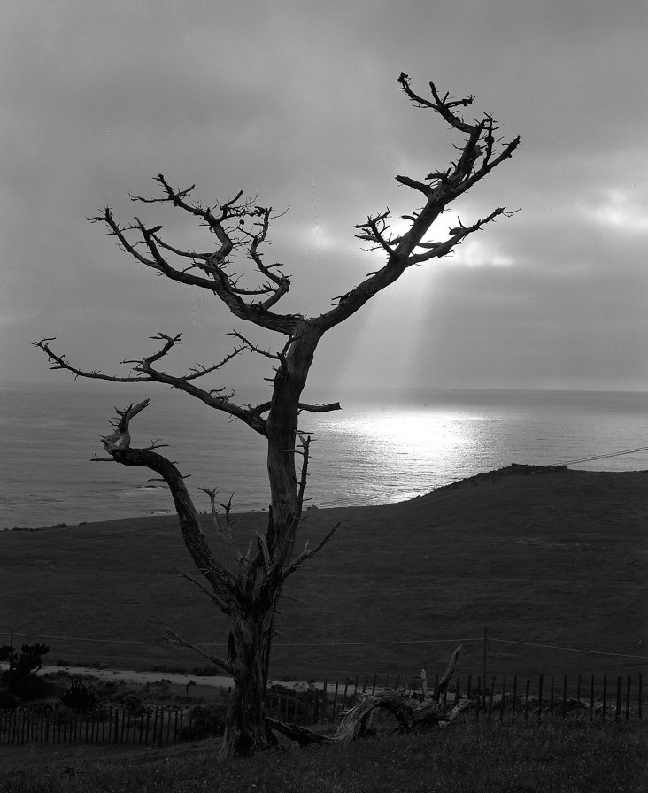Pacific Ocean w/ Tree by Gerald Ratto